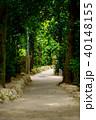 フクギ並木 並木道 夏の写真 40148155