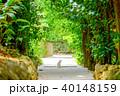 フクギ並木 並木道 夏の写真 40148159