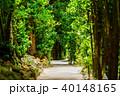 フクギ並木 並木道 夏の写真 40148165