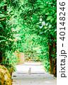 フクギ並木 並木道 夏の写真 40148246