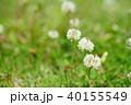 野の野草2 40155549