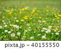 野の野草3 40155550