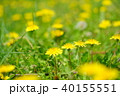 野の野草4 40155551