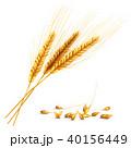 収穫 実り むぎのイラスト 40156449