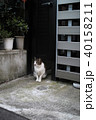 街で出くわした猫 40158211