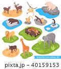 動物園 動物 ライオンのイラスト 40159153