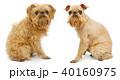 散髪 わんこ 犬の写真 40160975