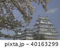 桜 さくら サクラの写真 40163299
