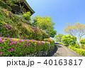 善峯寺 新緑 春の写真 40163817