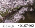上田城跡公園 桜 夜桜の写真 40167492