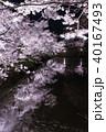 上田城跡公園 桜 夜桜の写真 40167493