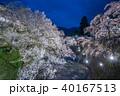 上田城跡公園 桜 夜桜の写真 40167513