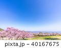 昭和の森 天鏡台 春の写真 40167675