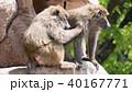 アヌビスヒヒ ヒヒ 毛づくろいの写真 40167771