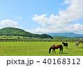 晴れ 北海道 サラブレッドの写真 40168312