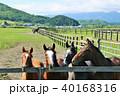 北海道 馬 サラブレッドの写真 40168316
