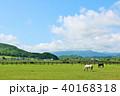 晴れ 北海道 サラブレッドの写真 40168318