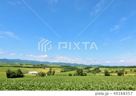 北海道 夏の青空 美瑛の丘 40168357