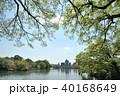 洗足池公園 池 新緑の写真 40168649