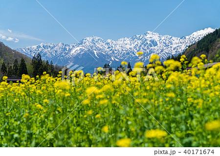 白馬青鬼地区の春 40171674