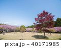 静峰ふるさと公園 八重桜まつり 八重桜の写真 40171985