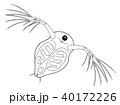 ミジンコ  キャラクター 正面から見たところ ぬりえ 40172226
