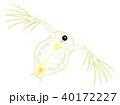 ミジンコ キャラクター 正面から見たところ 40172227