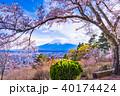 富士山 桜 富士見孝徳公園の写真 40174424