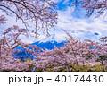 富士山 桜 春の写真 40174430