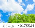新緑 青空 初夏の写真 40175584