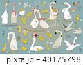 鳥 イラスト 挿絵のイラスト 40175798