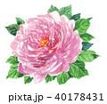 花 薔薇 ピンクのイラスト 40178431