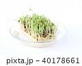 豆苗 芽 新芽の写真 40178661