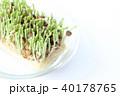 豆苗 芽 新芽の写真 40178765