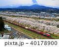 東北本線・白石川の桜並木を行く貨物列車 40178900