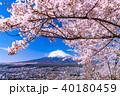 富士山 桜 富士の写真 40180459