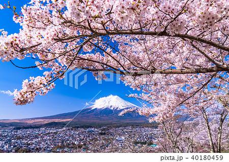 《山梨県》富士山と満開の桜 40180459