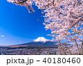 富士山 桜 春の写真 40180460