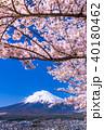 富士山 桜 富士の写真 40180462