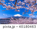 富士山 桜 春の写真 40180463