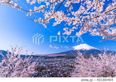 《山梨県》富士山と満開の桜 40180464
