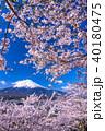 富士山 桜 富士の写真 40180475