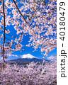 富士山 桜 富士の写真 40180479