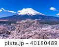 富士山 桜 富士の写真 40180489