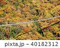 吊り橋 紅葉 秋の写真 40182312