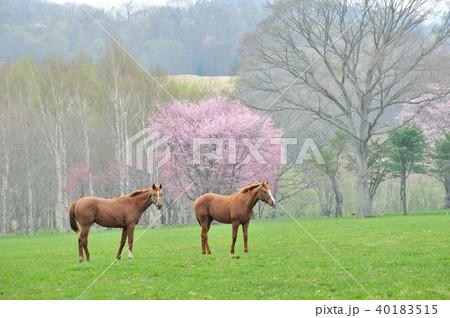 馬と桜 40183515