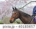 馬と桜 40183657