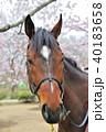馬と桜 40183658