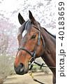 馬と桜 40183659