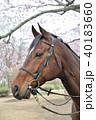 馬と桜 40183660